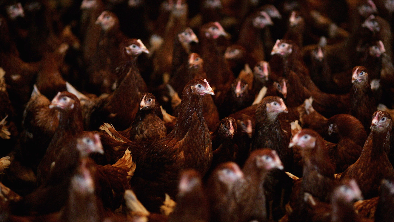 british-grocers-reject-us.-chlorine-washed-chicken-as-row-over-welfare-standards-deepen