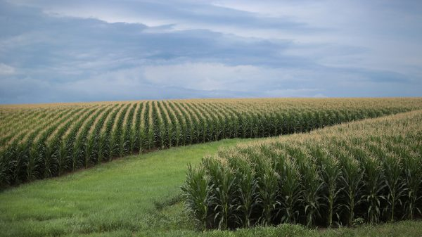 the-wall-street-journal:-even-with-a-strong-crop-this-year,-us.-farmers-are-suffering