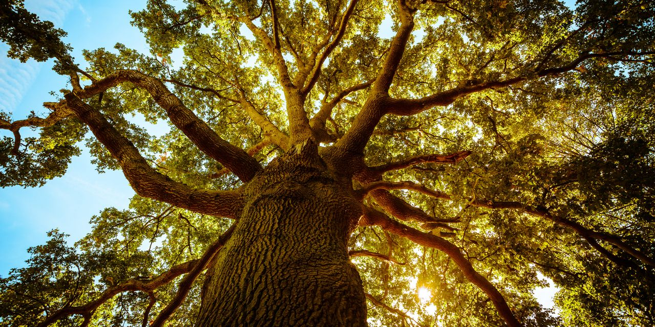 the-tell:-trees-don't-grow-to-the-sky:-tech-stocks-can't-outperform-forever,-bca-research-argues