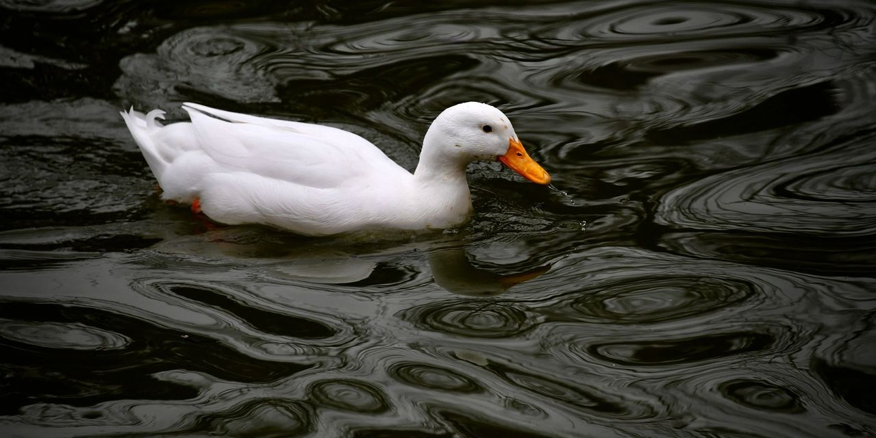 need-to-know:-why-'quacks'-and-bubbles-can-so-easily-proliferate