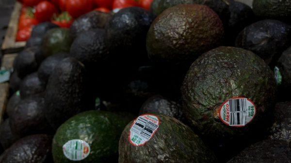 :-avocado-price-drop-drives-down-mission-produce-revenue
