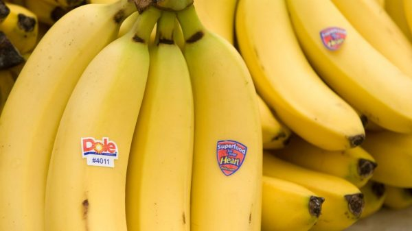ipo-report:-dole-ipo:-5-things-to-know-about-the-fruit-and-vegetable-giant-before-it-goes-public